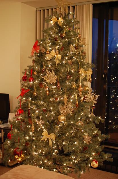 写真: nyuちゃん宅にて クリスマスツリー