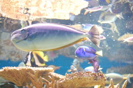 New England Aquarium(色とりどりのさかな)