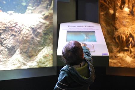New England Aquarium(展示に興味津々)