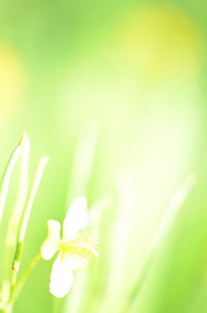 メルヘンちっくなお花さん