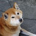 Photos: くつろぎ