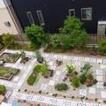 Photos: 2014.5.20現在の上から見た我が家の庭