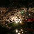 Photos: 弘前34