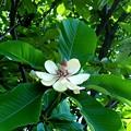 Photos: R6285096朴の木の花