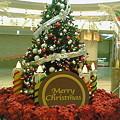 Photos: なんばウォークのクリスマスツリー
