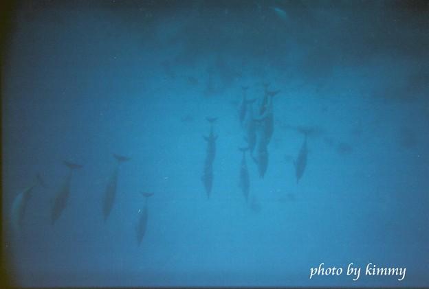 Photos: 深く深く潜っても透き通っているから見える