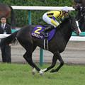 写真: イスラボニータ 返し馬_1(第74回 皐月賞)