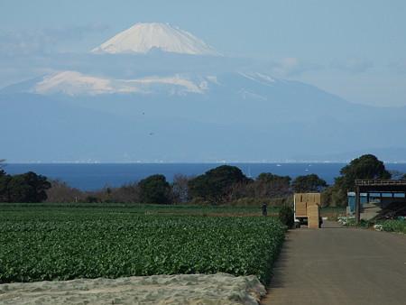 三浦半島からの富士