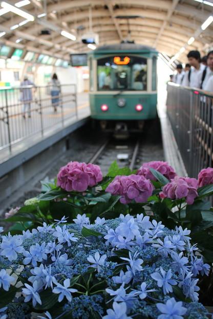 江ノ電藤沢駅の紫陽花