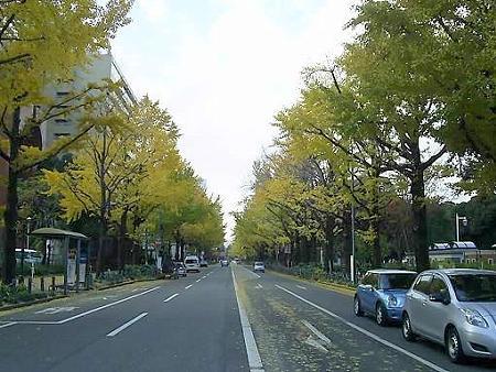 081128-山下公園通り (5)