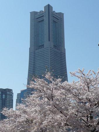 090409-MM21 ランドマークタワーと桜 (17)