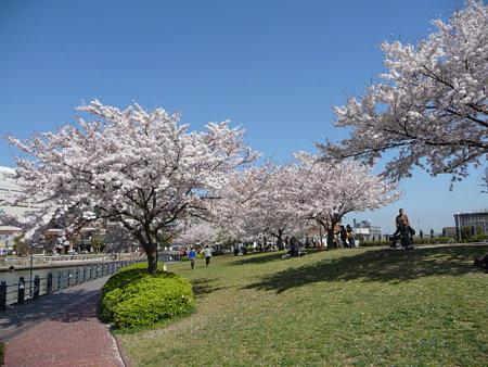 090409-MM21 汽車道と桜 (6)