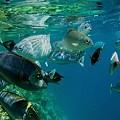 天然の水族館