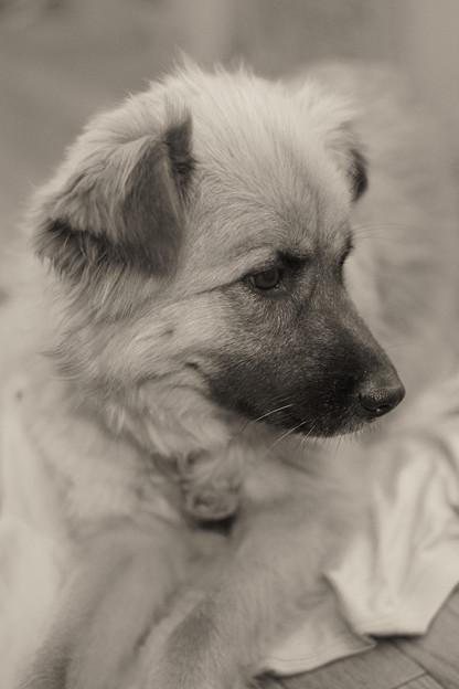 Photos: 借りてきた犬!?