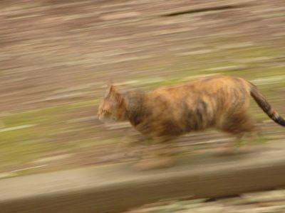 たたずみ猫2