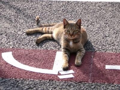 リラックス猫2