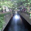 Photos: 目黒川 千歳橋から