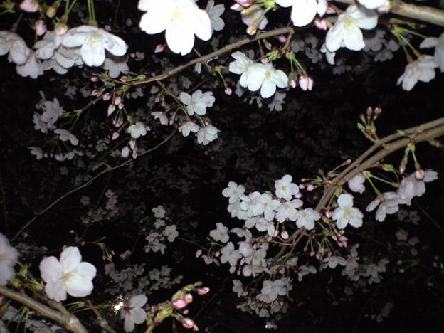 夜桜~花の嵐~