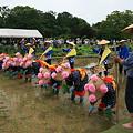 写真: 後楽園お田植え祭り3