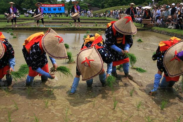 写真: 後楽園お田植え祭り6
