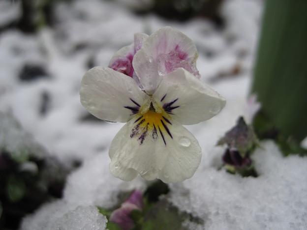 IMG_1706-雪の華