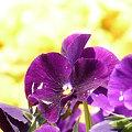 写真: 2009_0409_121426-P1020291
