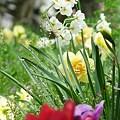写真: 2009_0416_132953-P1020411