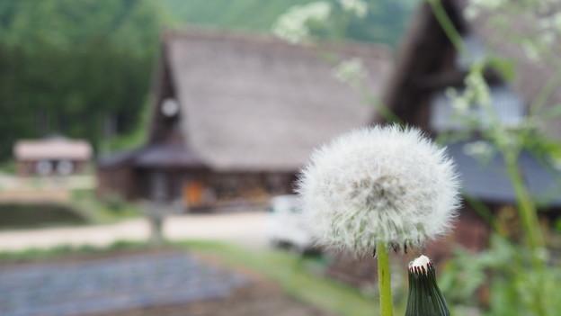 綿帽子(白川郷)