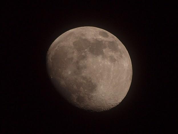 今日の月(月齢11.6)