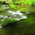 Photos: Green float^^