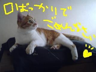 gomen_nyasai