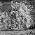 Photos: 樹木