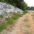 写真: ハマヤマトシジミのいる環境