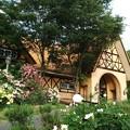Photos: お庭が素敵なレストラン……(1)