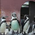 Photos: ペンギンたち