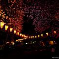 Photos: 夜桜(アンダーに)