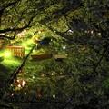 Photos: 素敵な春の夜