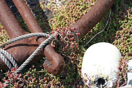 2009.03.07 諸磯漁港 イソフサギに蔽われる碇と浮