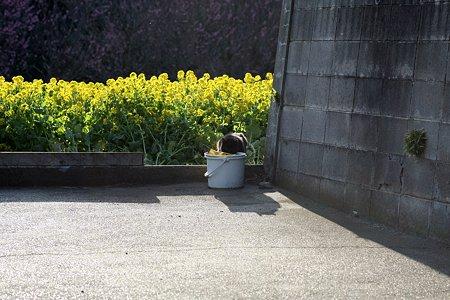 2009.03.19 追分市民の森 身を潜める黒猫