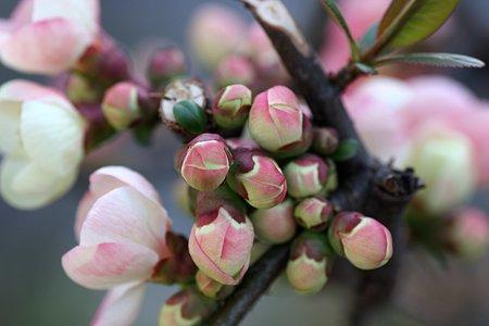 2009.03.19 木瓜