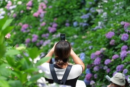 2014.06.17 鎌倉 成就院 紫陽花とスマホ