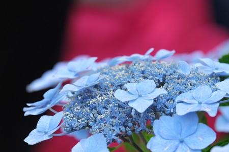 2014.06.17 鎌倉 長谷寺 紫陽花 長谷の潮騒
