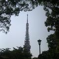 Photos: 森の中の東京タワー