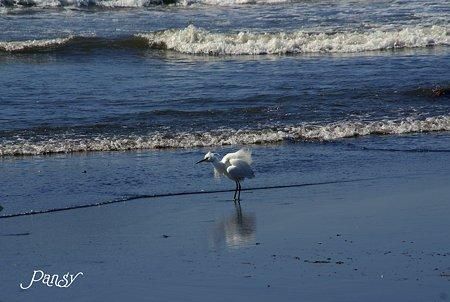 浜辺にて・・2