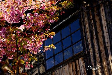 桜が映える家・・