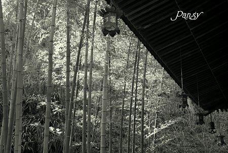 竹林と・・