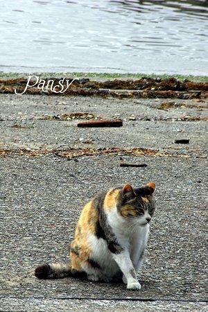海辺の猫・・