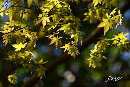 生まれたての葉っぱたち・・