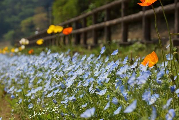 くりはま花の国-053