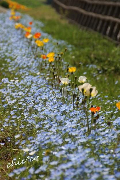 くりはま花の国-055